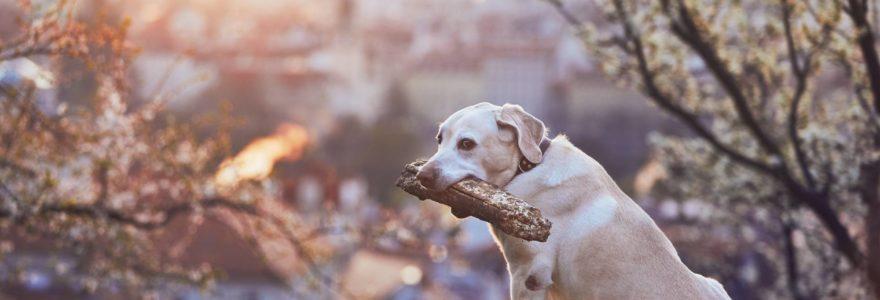 vivir con un perro